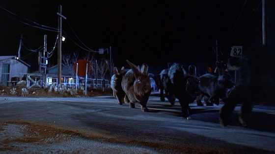 Night of the Lepus(1972)